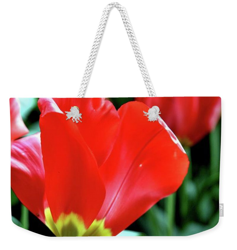 Flowers Weekender Tote Bag featuring the photograph Red Tulips by Sheila Ping
