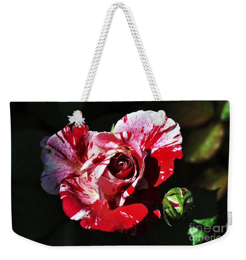 Clay Weekender Tote Bag featuring the photograph Red Verigated Rose by Clayton Bruster