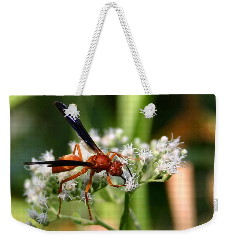 Wasp Weekender Tote Bag featuring the photograph Red Wasp On Lace by Kristin Elmquist
