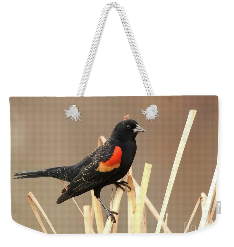 Red-winged Blackbird Weekender Tote Bag featuring the photograph Red Winged Blackbird I I by Angela Koehler