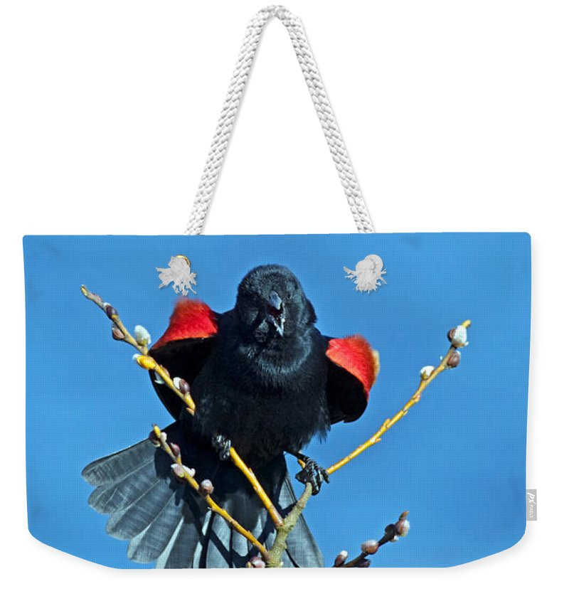 Red-winged Blackbird Weekender Tote Bag featuring the photograph Red-winged Blackbird by Randall Ingalls
