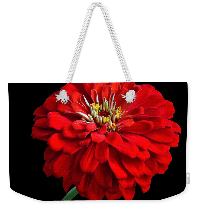 Flower Weekender Tote Bag featuring the photograph Red Zinnia by Sandy Keeton