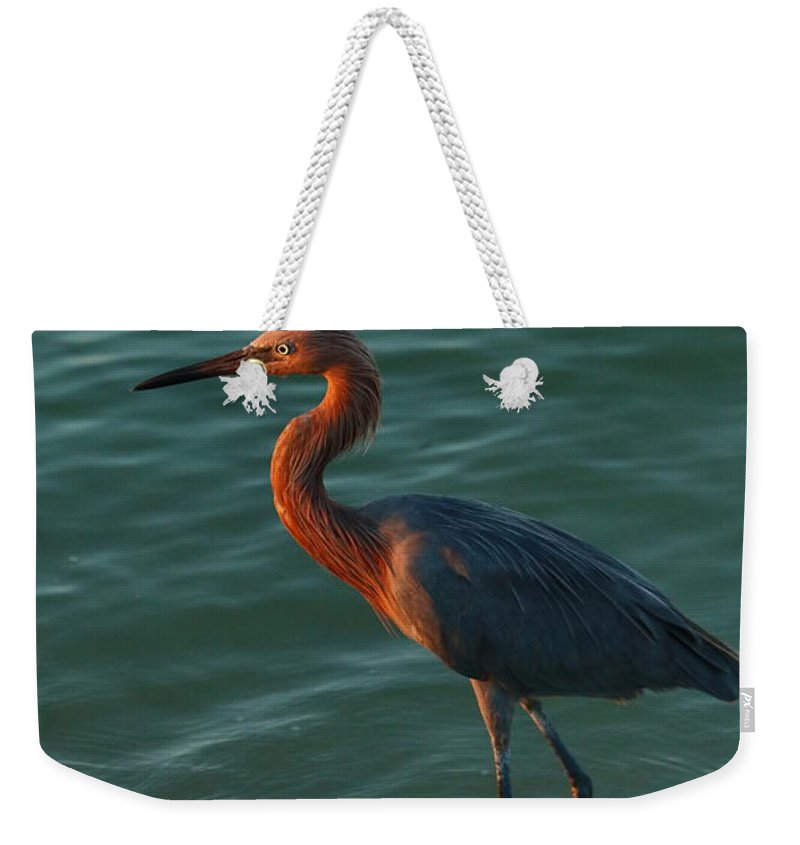 Reddish Egret Weekender Tote Bag featuring the photograph Reddish At Sunset by Christiane Schulze Art And Photography