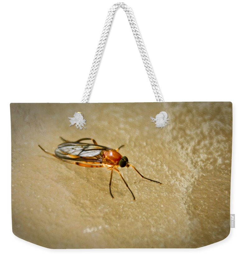Fly Weekender Tote Bag featuring the photograph Redfly With Black Eyes by Douglas Barnett