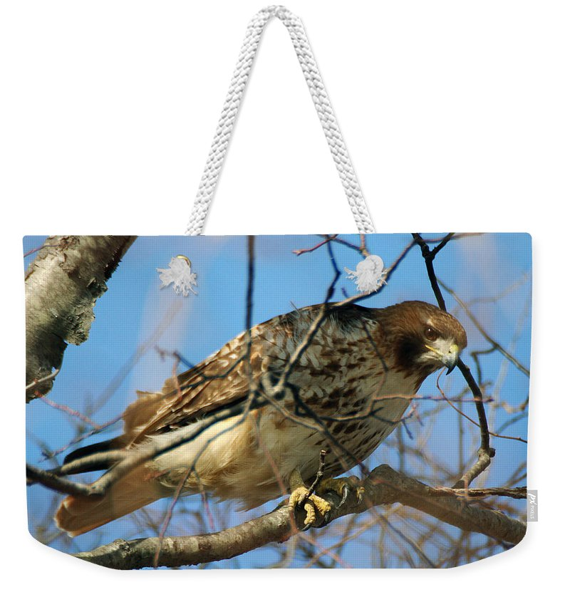 Wildlife Weekender Tote Bag featuring the photograph Redtail Among Branches by William Selander