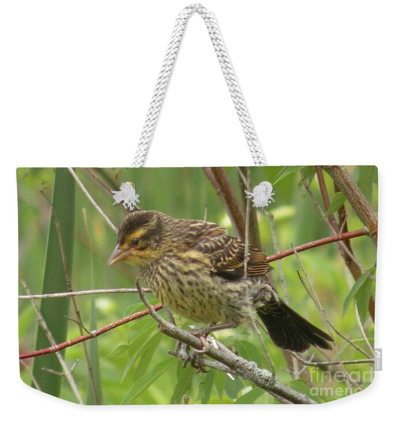 Redwing Weekender Tote Bag featuring the photograph Redwing Blackbird - Immature by Joanne Young
