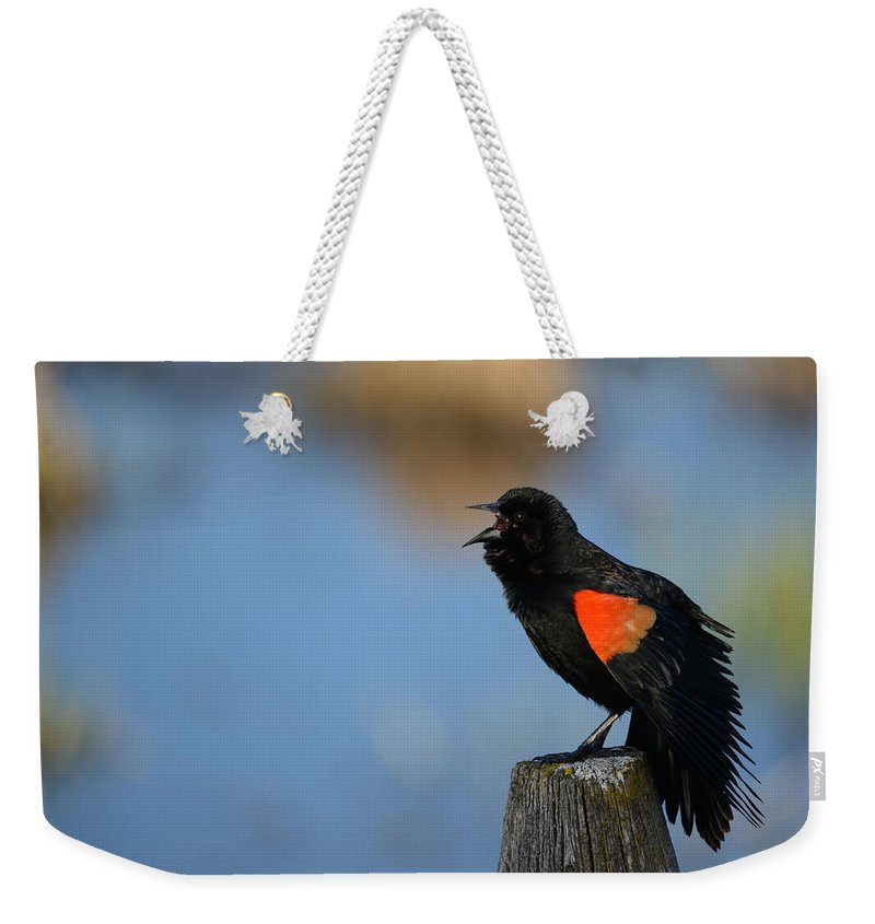 Song Bird Weekender Tote Bag featuring the photograph Redwing Morning by Whispering Peaks Photography
