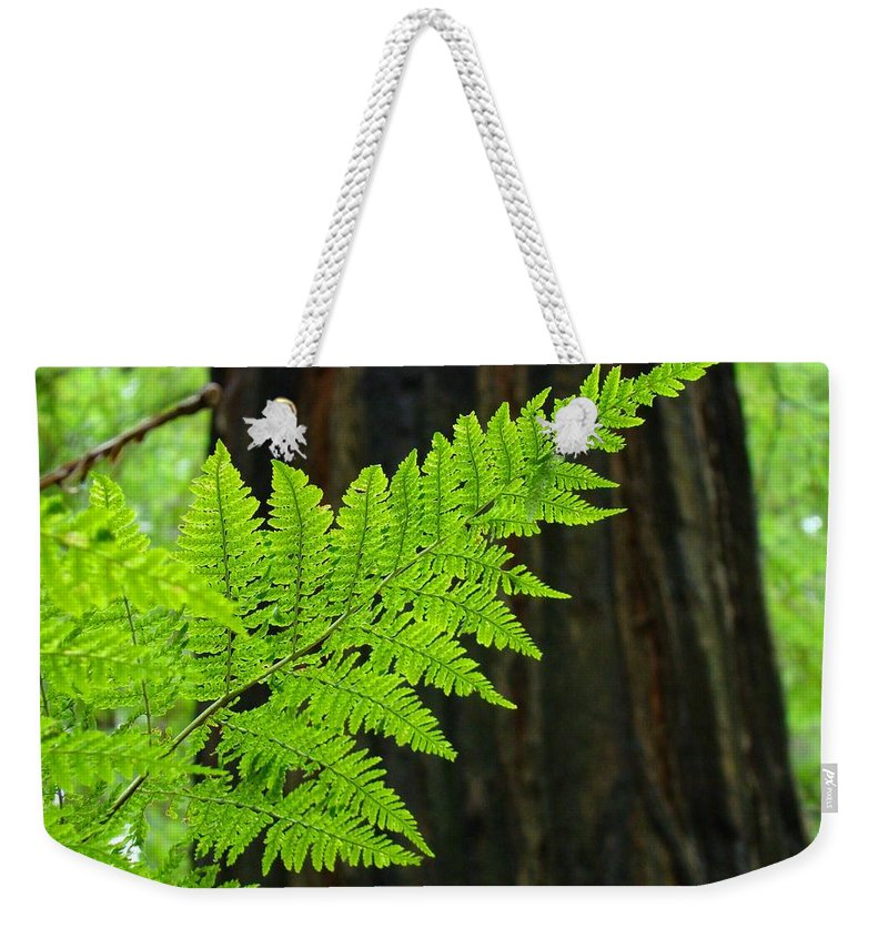 Fern Weekender Tote Bag featuring the photograph Redwood Tree Forest Ferns Art Prints Giclee Baslee Troutman by Patti Baslee