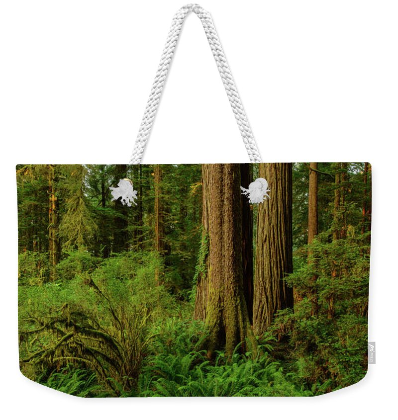 Charlie Choc Weekender Tote Bag featuring the photograph Redwoods And Ferns by Charlie Choc