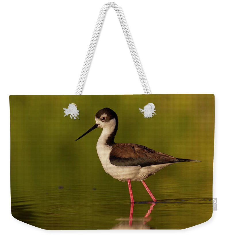 Bird Weekender Tote Bag featuring the photograph Reflection by Nigil Haroon