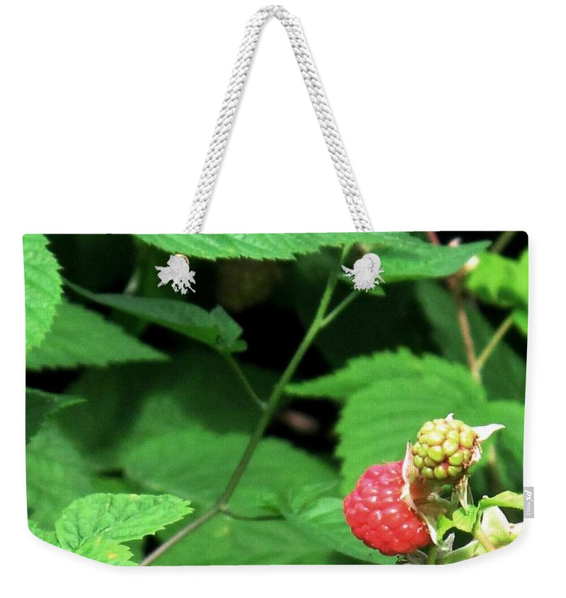 Rasberry Weekender Tote Bag featuring the photograph Remembering One Sweet Rasberry by Ian MacDonald