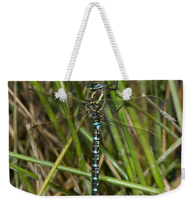 Dragonfly Weekender Tote Bag featuring the photograph Resting Darner by Bob Kemp