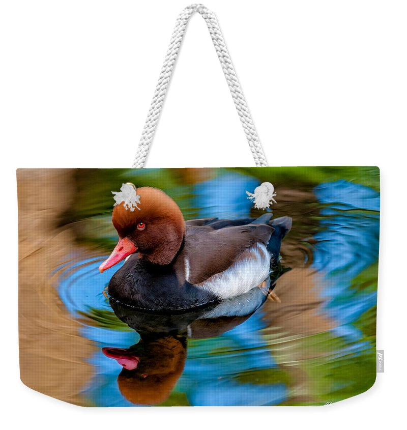 Bird Weekender Tote Bag featuring the photograph Resting In Pool Of Colors by Christopher Holmes