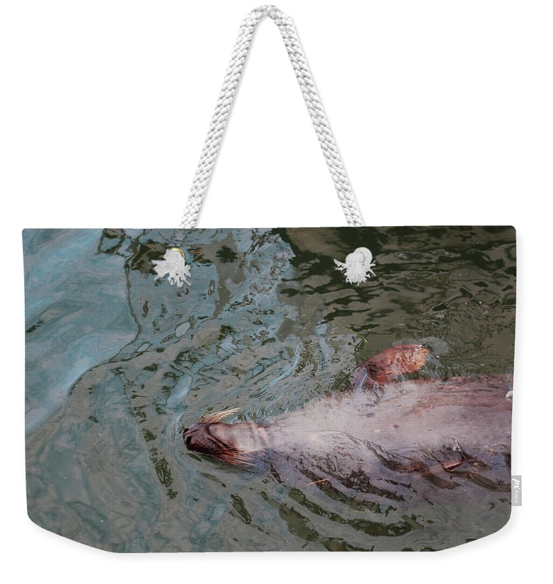 Resting Seal Weekender Tote Bag featuring the photograph Resting Seal by Imagery-at- Work