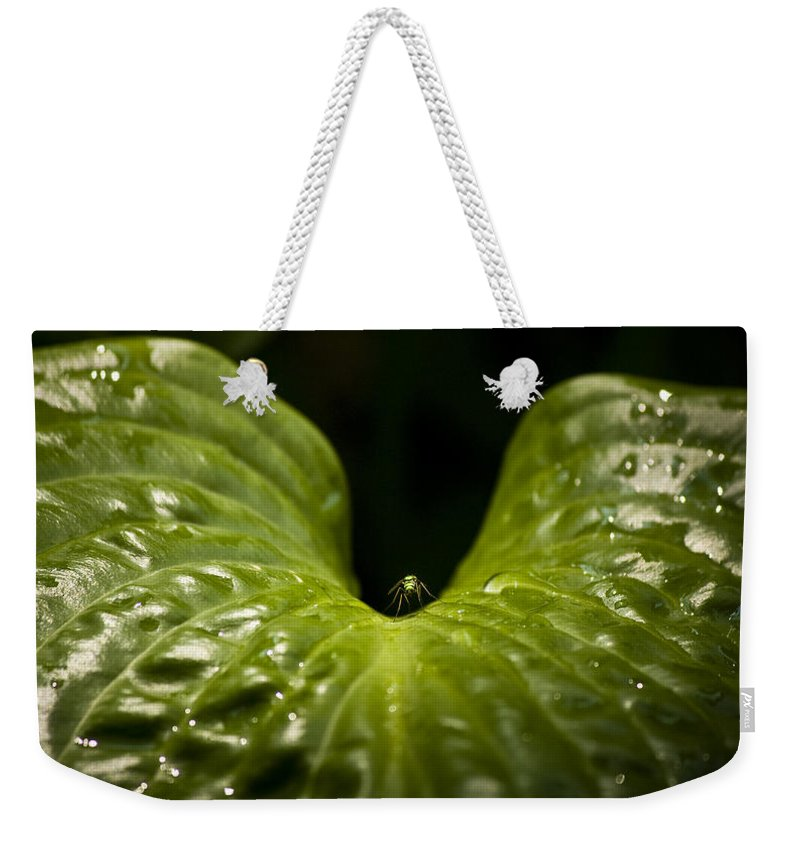 Rest Weekender Tote Bag featuring the photograph Resting Spot by Teresa Mucha