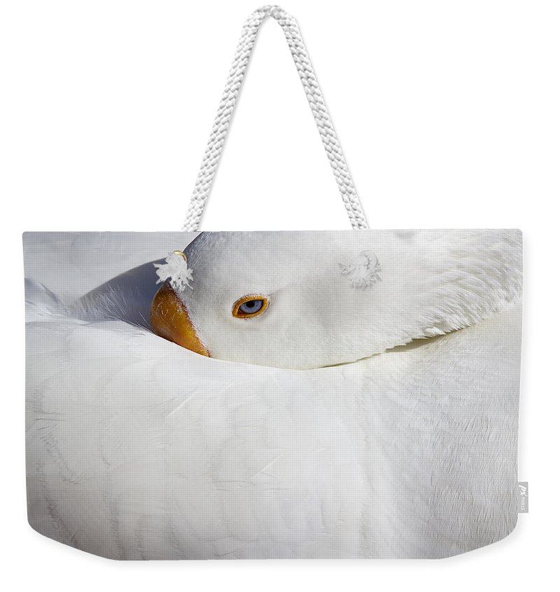 Goose Weekender Tote Bag featuring the photograph Resting White Goose by Phyllis Denton
