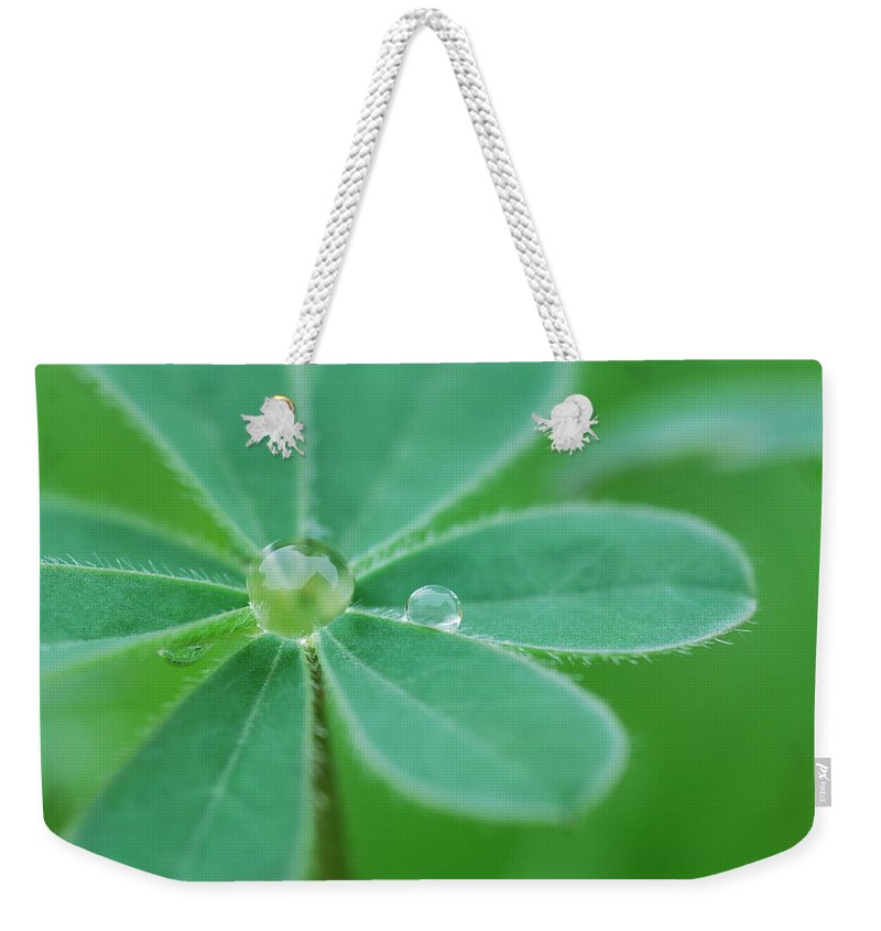Plant Weekender Tote Bag featuring the photograph Retaining Water by Donna Blackhall
