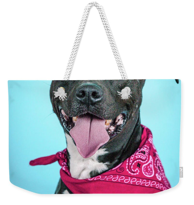 Dogs Weekender Tote Bag featuring the photograph Rex 3 by Pit Bull Headshots by Headshots Melrose