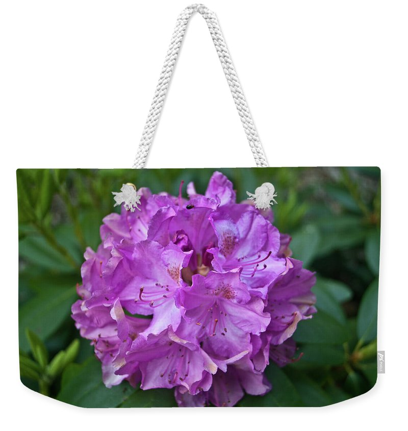 Rhododendron Weekender Tote Bag featuring the photograph Rhododendron Elegance by Douglas Barnett