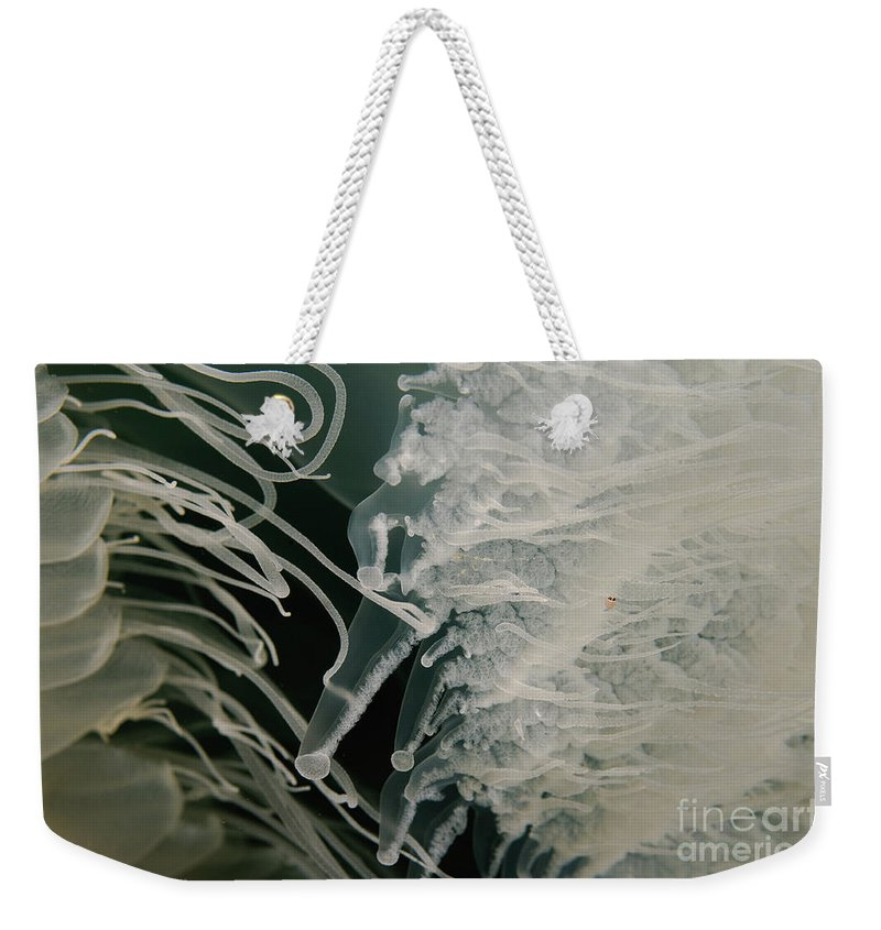 Underwater Weekender Tote Bag featuring the photograph Rhopilema Nomadica Jellyfish by Hagai Nativ