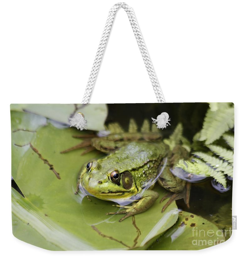 Frog Weekender Tote Bag featuring the photograph Ribbet In The Pond by Deborah Benoit