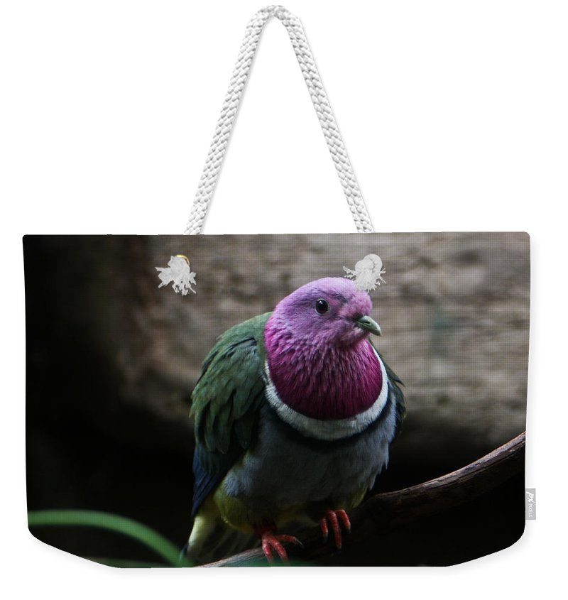 Ring Weekender Tote Bag featuring the photograph Ring Necked Dove by Douglas Barnett