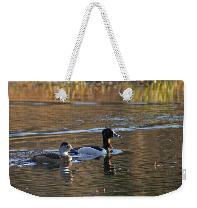 Duck Weekender Tote Bag featuring the photograph Ring Necked Duck by Heather Coen