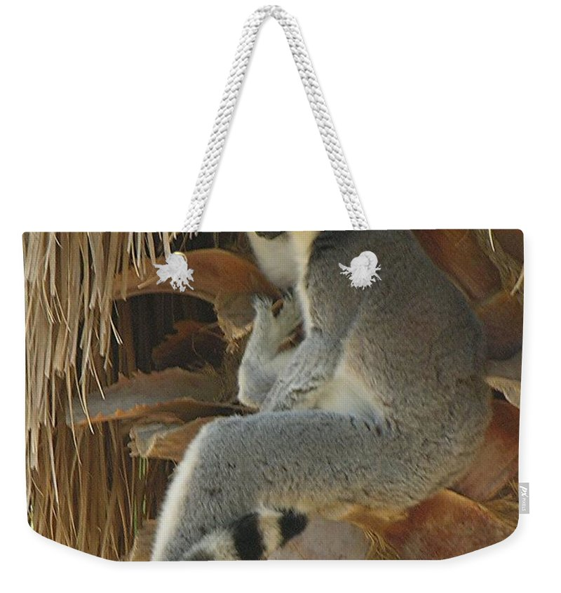 Ringtail Weekender Tote Bag featuring the photograph Ring Tail by Diane Greco-Lesser