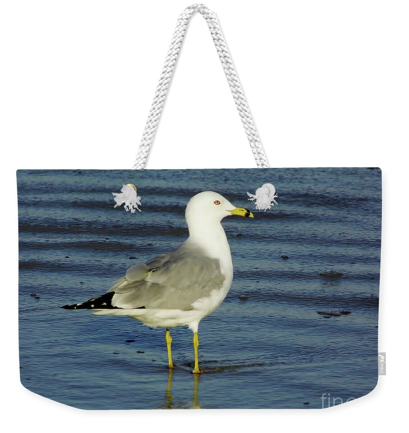Birds Weekender Tote Bag featuring the photograph Ringed Billed Sea Gull by D Hackett