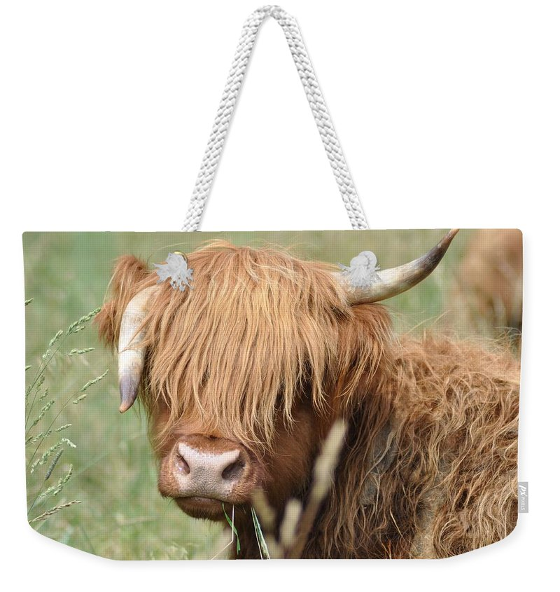 Cow Weekender Tote Bag featuring the photograph Ringo - Highland Cow by Bill Cannon
