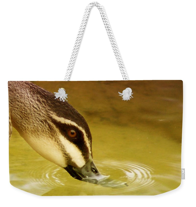 Animals Weekender Tote Bag featuring the photograph Ripples by Holly Kempe