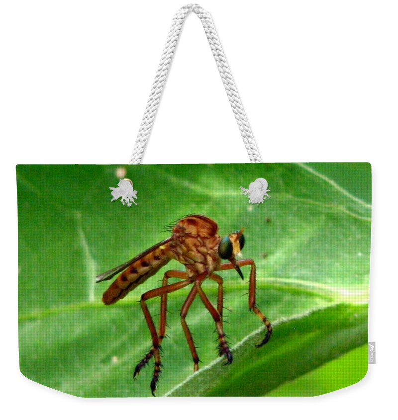 Robber Fly Weekender Tote Bag featuring the photograph Robber Fly by J M Farris Photography