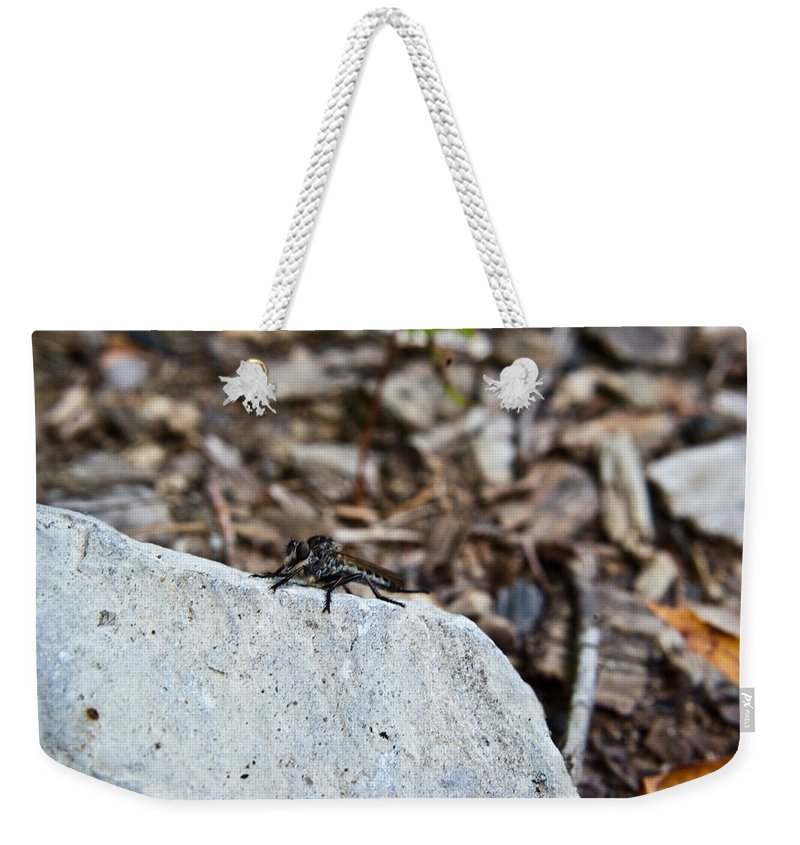 Sitting Weekender Tote Bag featuring the photograph Robber Fly Sitting by Douglas Barnett