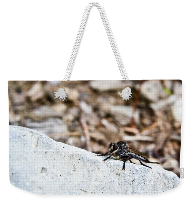 Stalking Weekender Tote Bag featuring the photograph Robber Fly Stalking by Douglas Barnett