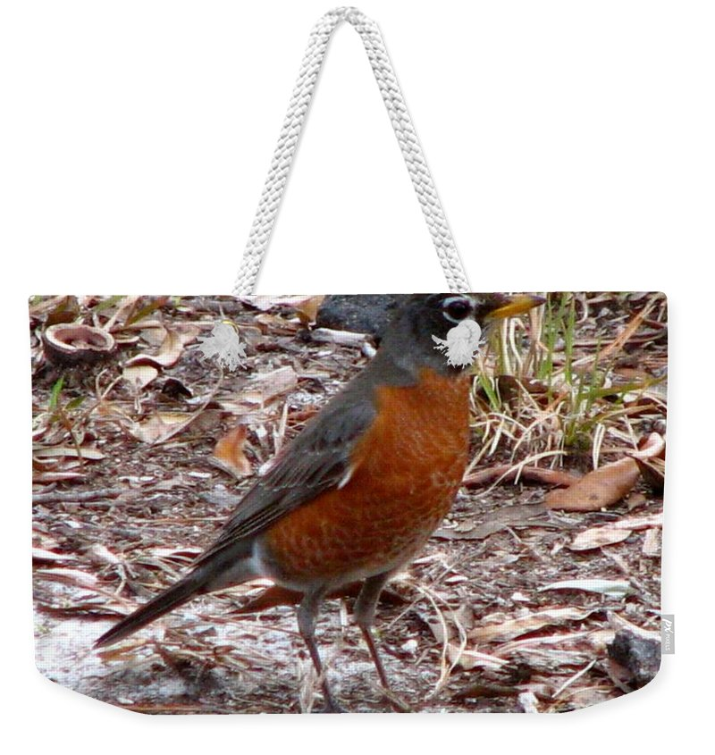 Robin Weekender Tote Bag featuring the photograph Robin by J M Farris Photography