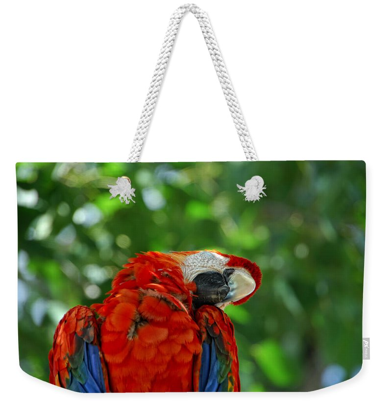 Parrot Weekender Tote Bag featuring the photograph Rock A Bye Birdie by Donna Blackhall