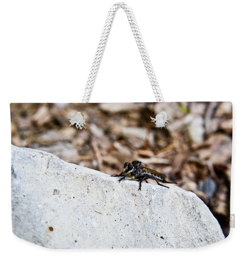 Rock Weekender Tote Bag featuring the photograph Rock And Robber Fly by Douglas Barnett