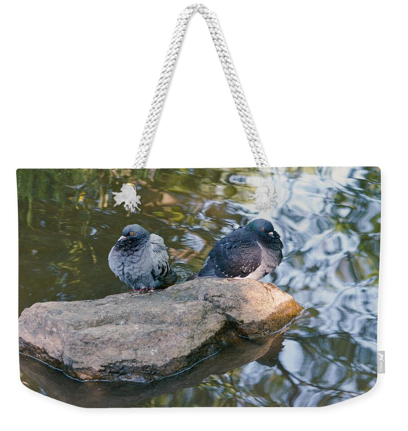Dove Weekender Tote Bag featuring the photograph Rock Doves by Asbed Iskedjian