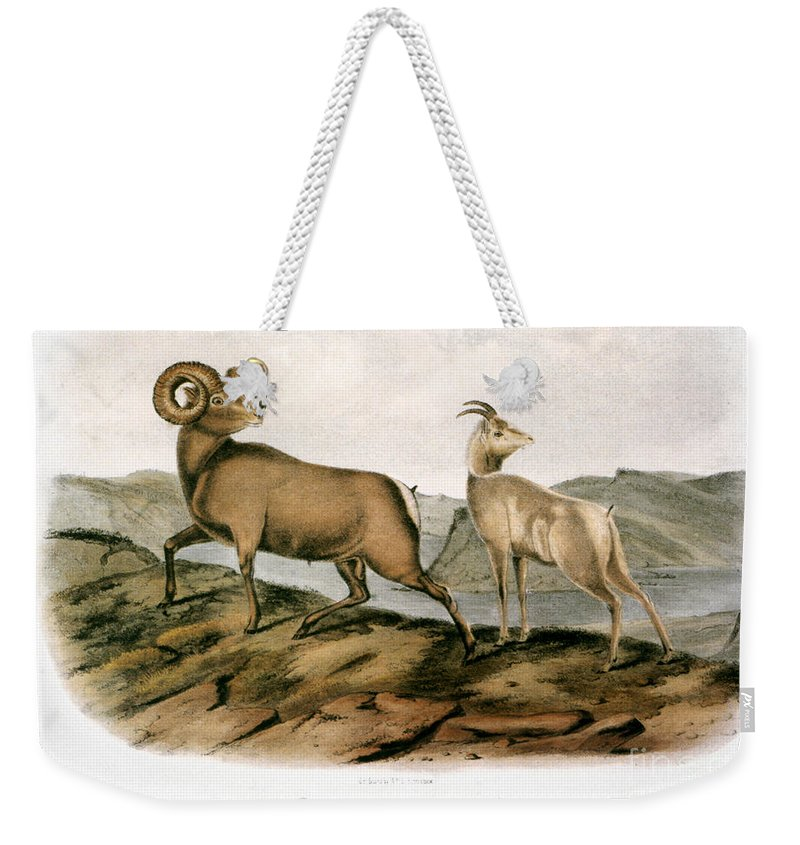 1846 Weekender Tote Bag featuring the photograph Rocky Mountain Sheep, 1846 by Granger