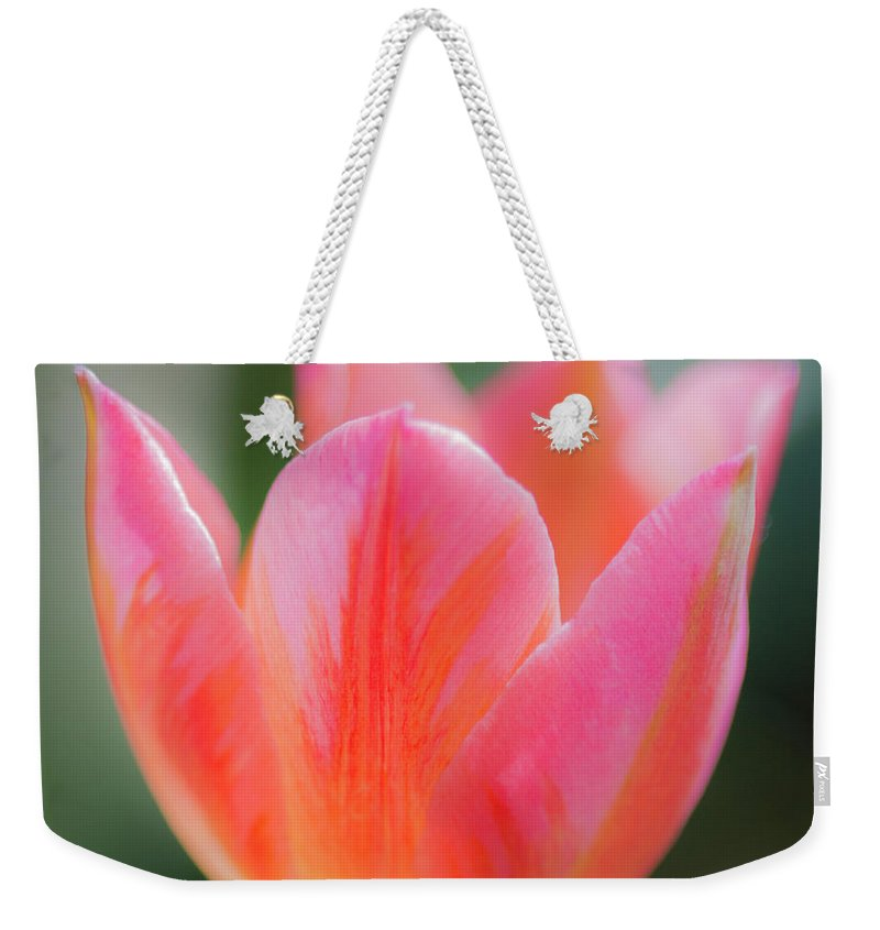 Tulip Weekender Tote Bag featuring the photograph Romantic Tulip by Stephen Bloedow