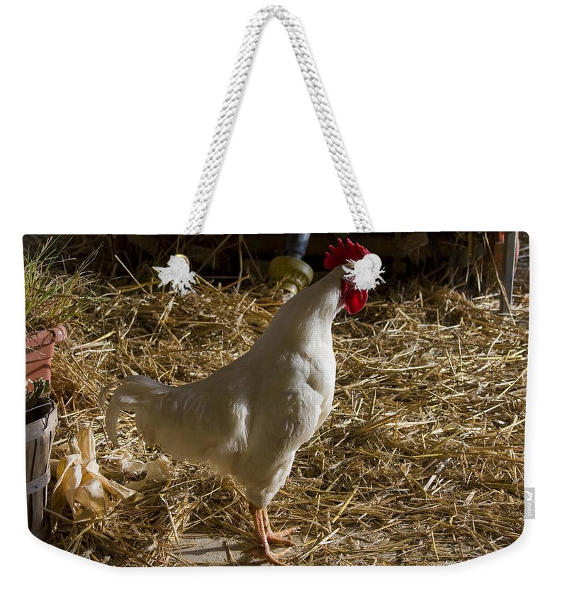 Rooster Crow Crowing Chicken Farm Straw White Red Rural Weekender Tote Bag featuring the photograph Rooster Crowing by Andrei Shliakhau