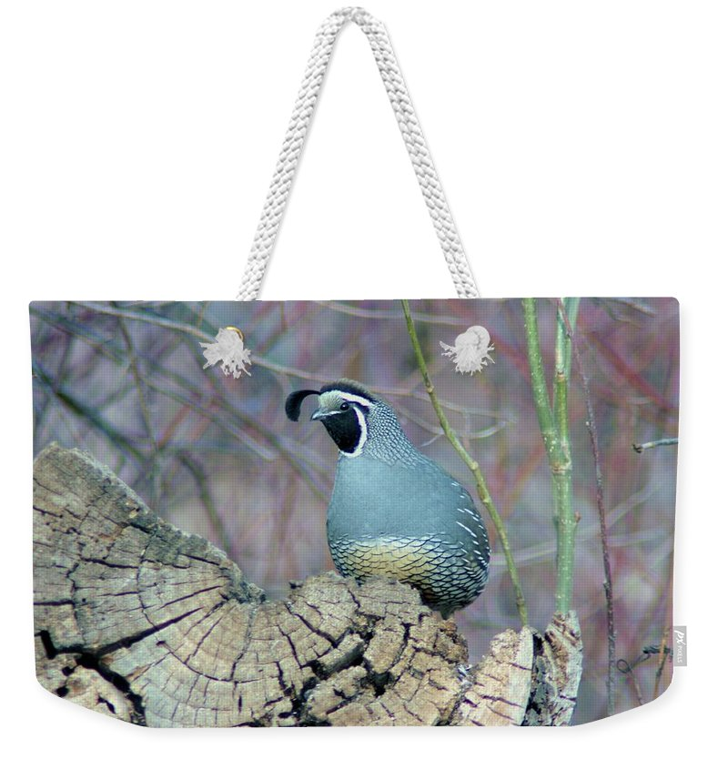 Fowl Weekender Tote Bag featuring the photograph Rooster Quail by Jeff Swan