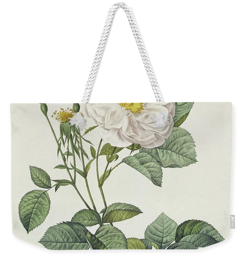 Rosa Weekender Tote Bag featuring the drawing Rosa Alba Foliacea by Pierre Joseph Redoute