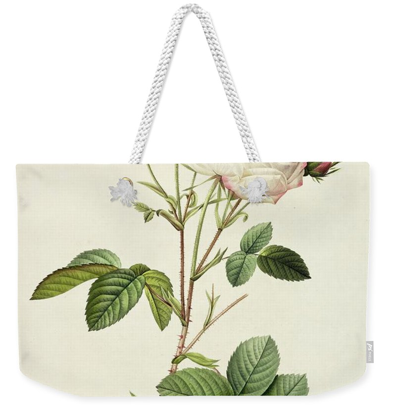 Rosa Weekender Tote Bag featuring the drawing Rosa Centifolia Mutabilis by Pierre Joseph Redoute