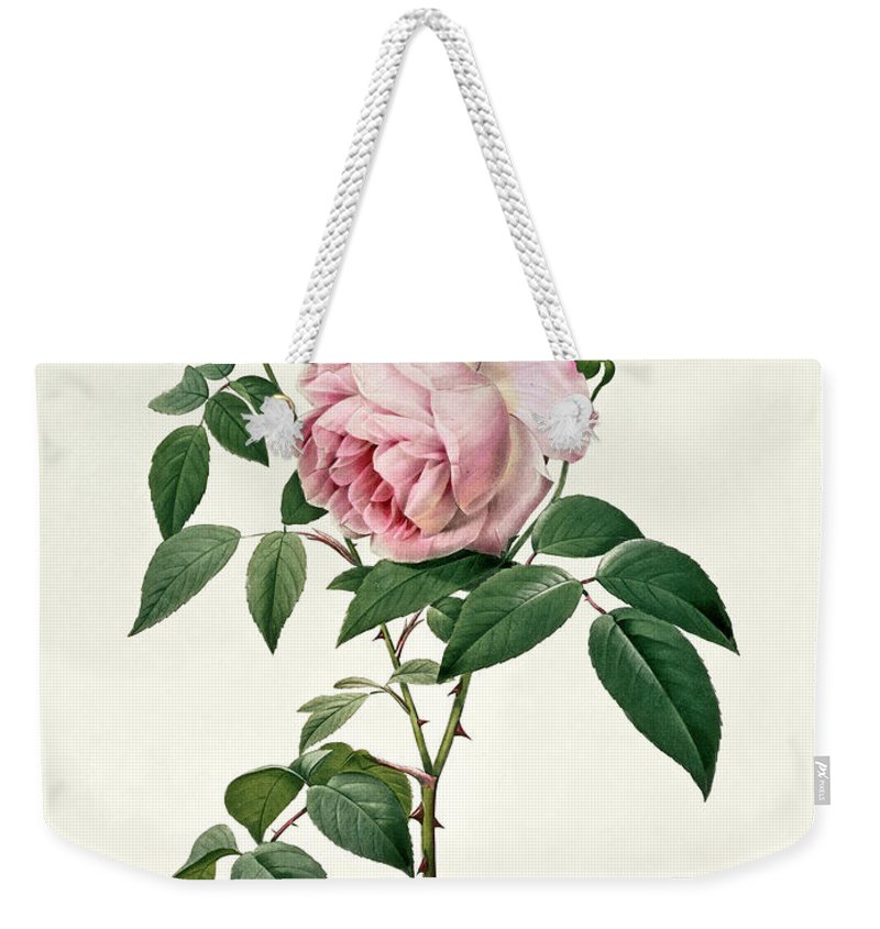Rosa Weekender Tote Bag featuring the drawing Rosa Chinensis And Rosa Gigantea by Joseph Pierre Redoute