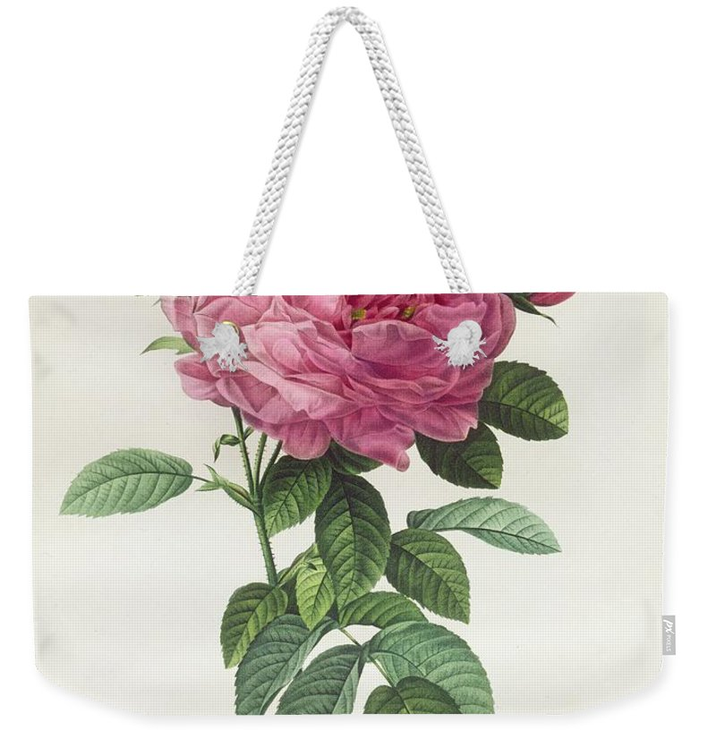 Rosa Weekender Tote Bag featuring the drawing Rosa Gallica Flore Giganteo by Pierre Joseph Redoute