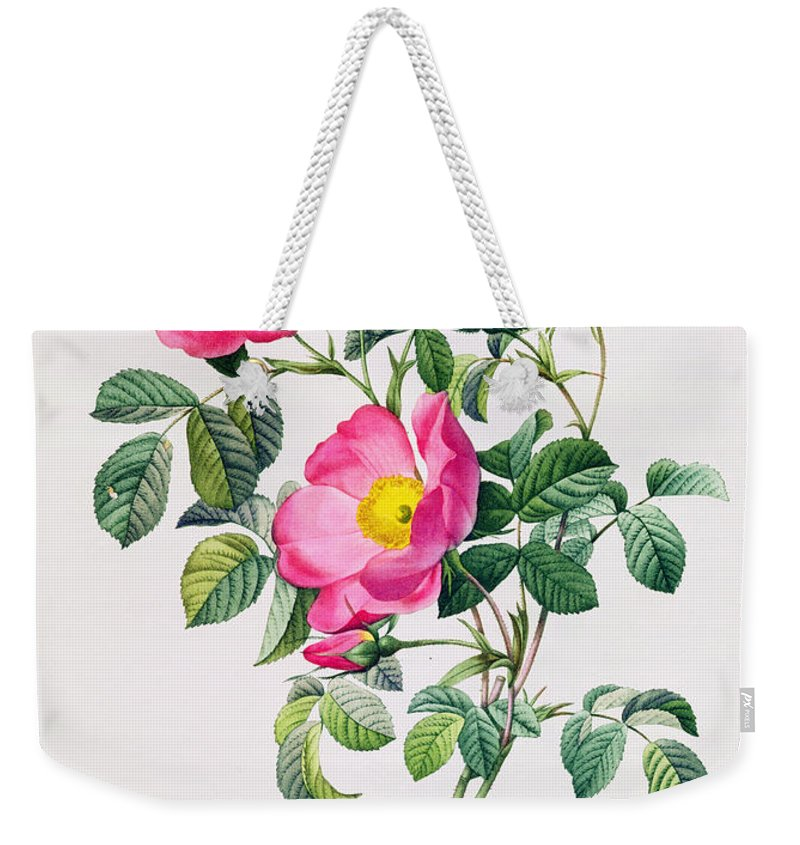 Rosa Weekender Tote Bag featuring the drawing Rosa Lumila by Pierre Joseph Redoute