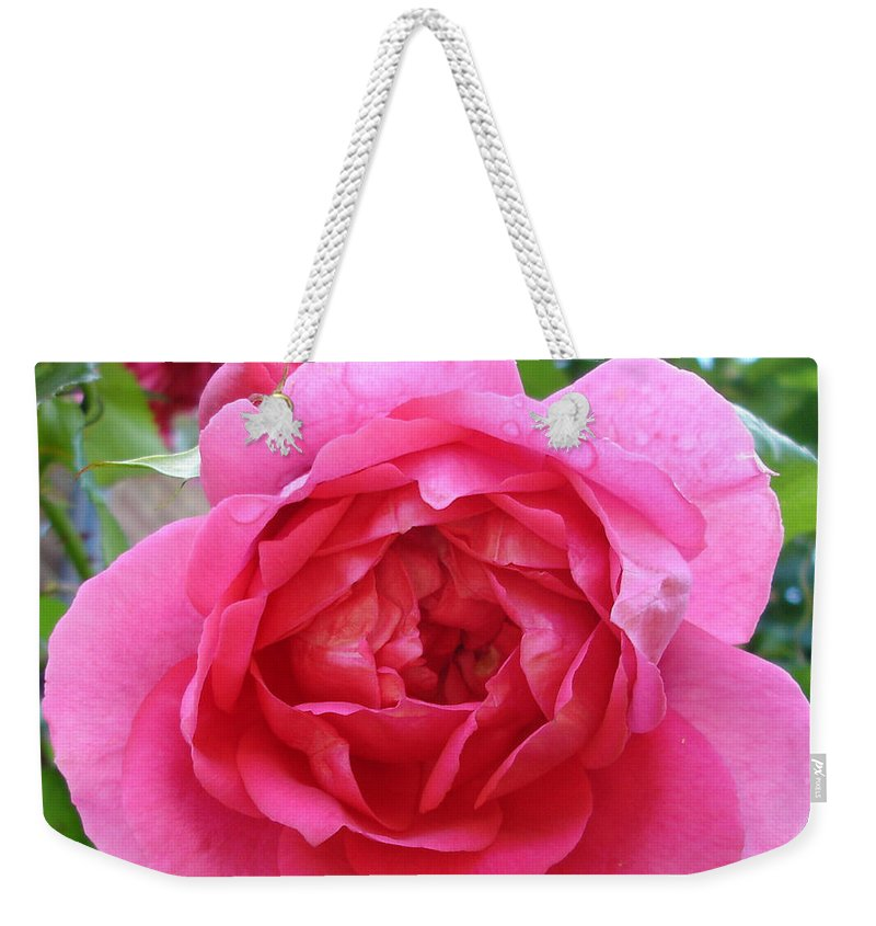 Rose Weekender Tote Bag featuring the photograph Rosa Zephrine by Susan Baker