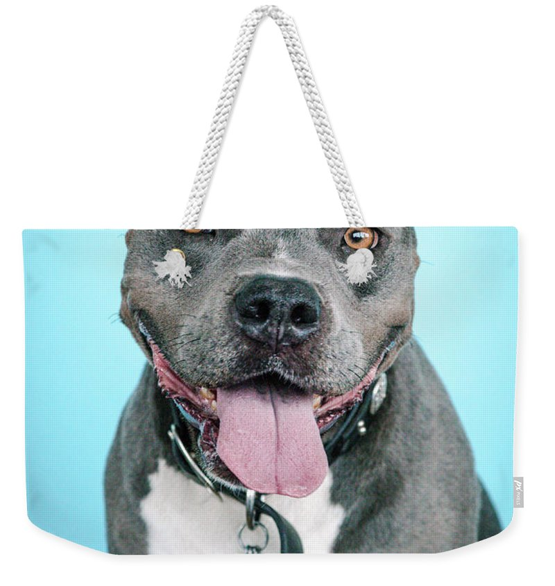 Dogs Weekender Tote Bag featuring the photograph Rascal by Pit Bull Headshots by Headshots Melrose