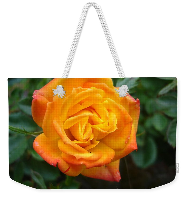 Rose Weekender Tote Bag featuring the photograph Rose - Irish Eyes by Susan Baker